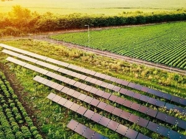 半透明的太阳能板有什么用?剑桥研究者回复你:种地的同时来发电